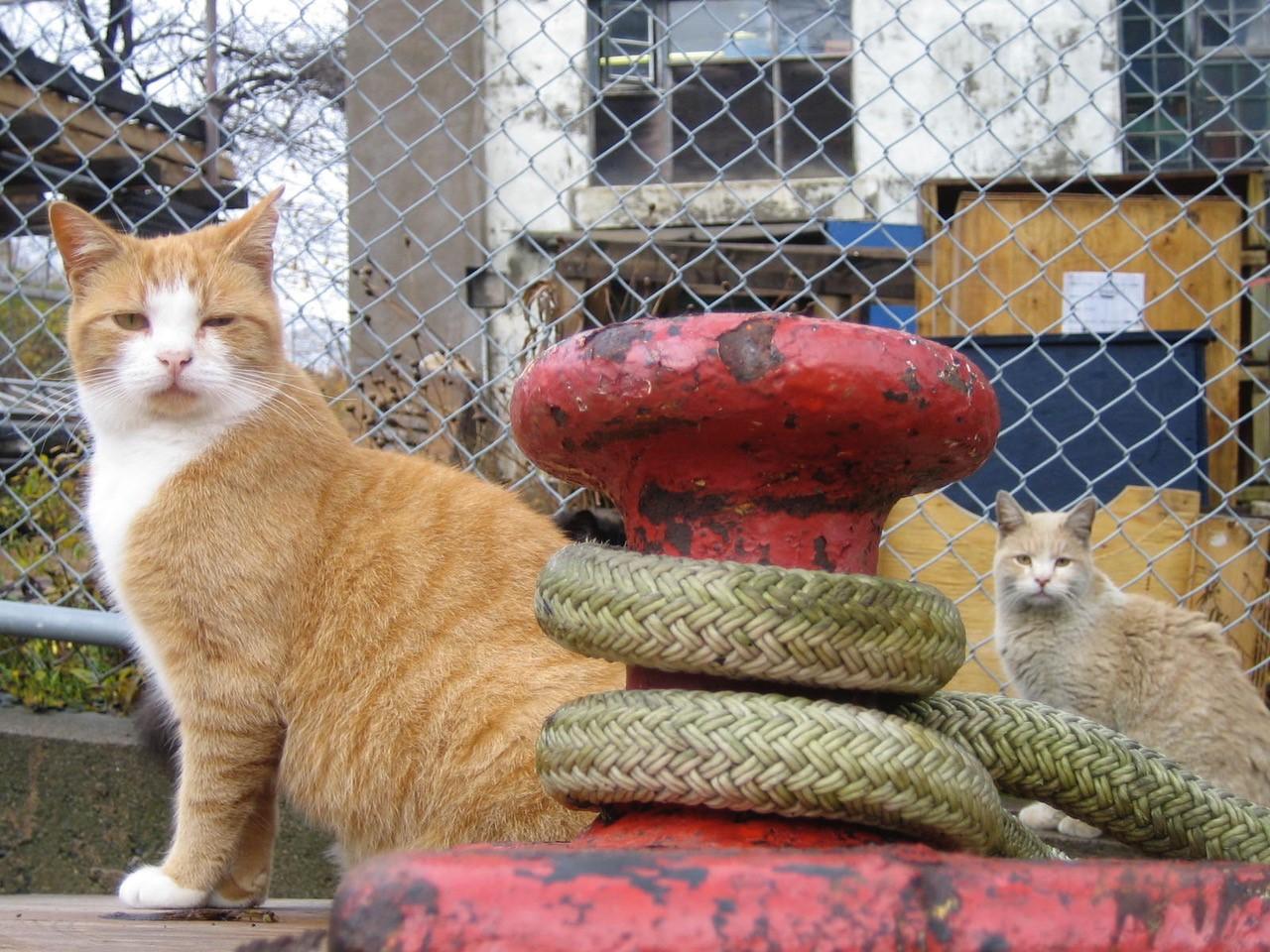 frontpagecats.jpg