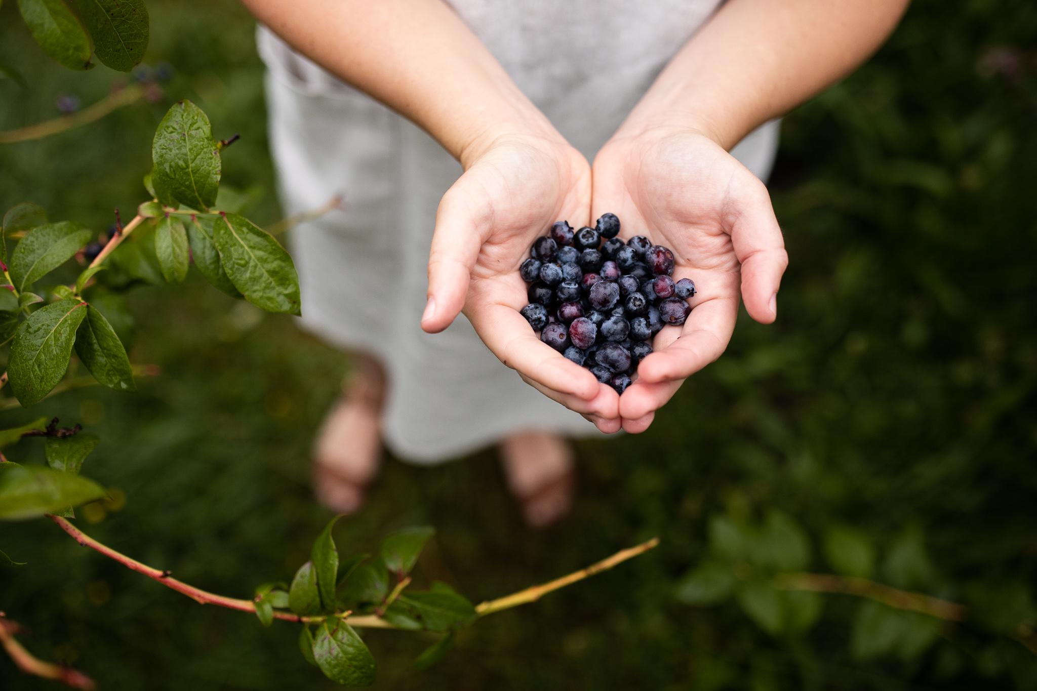 Winnow blueberries