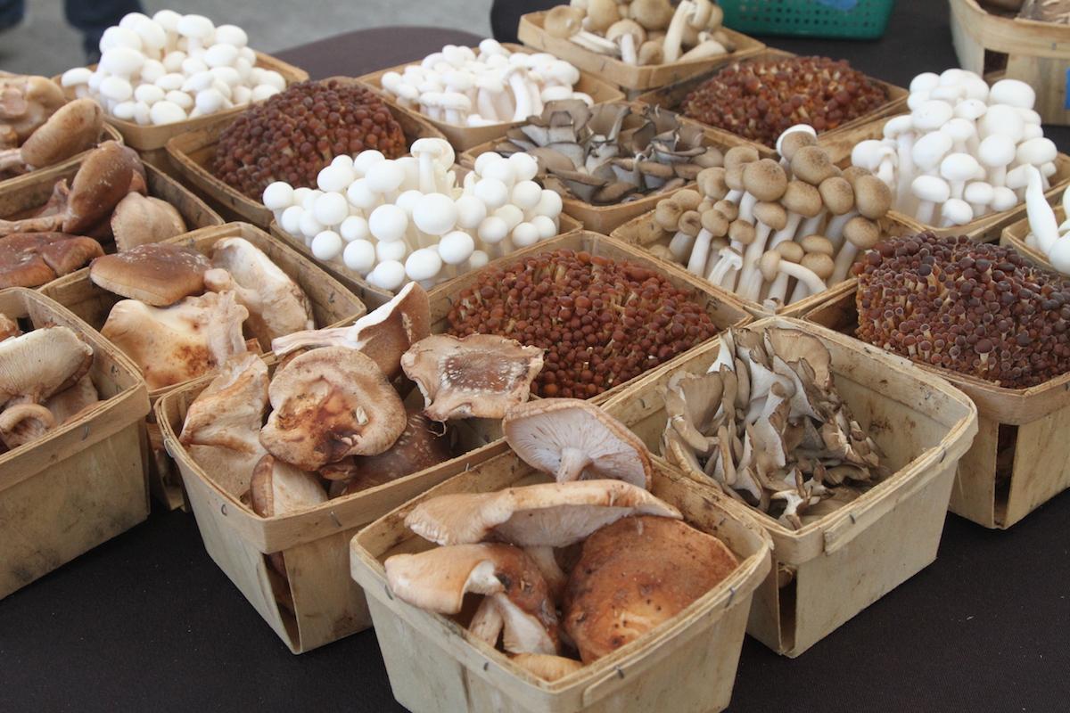 betsy_corsiglia_mushroom_web.JPG