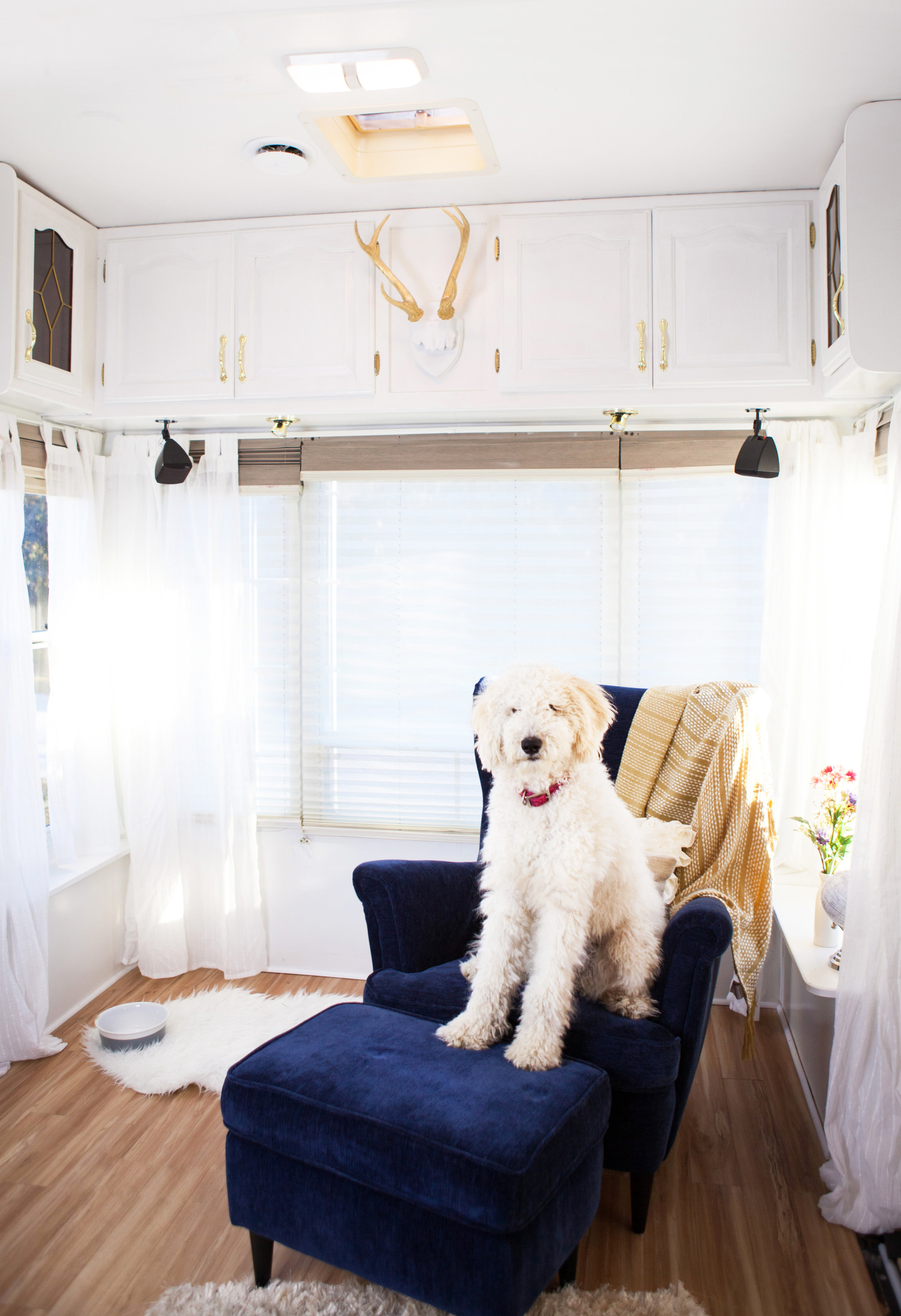 camper reno with pup