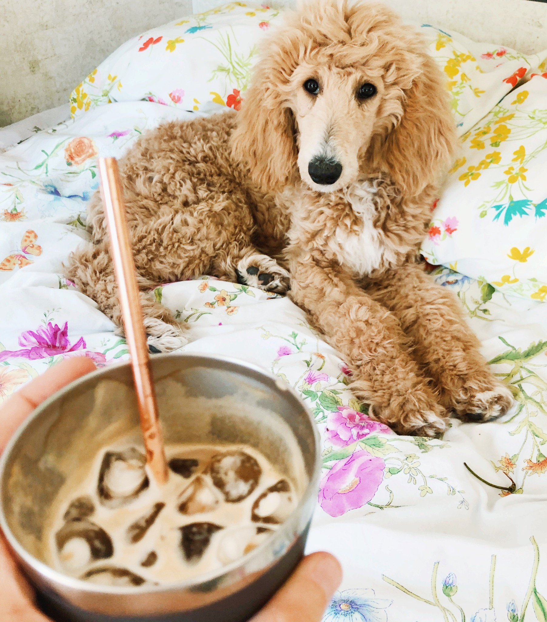 My favorite combo: iced coffee and a cute puppy. It is a win win.