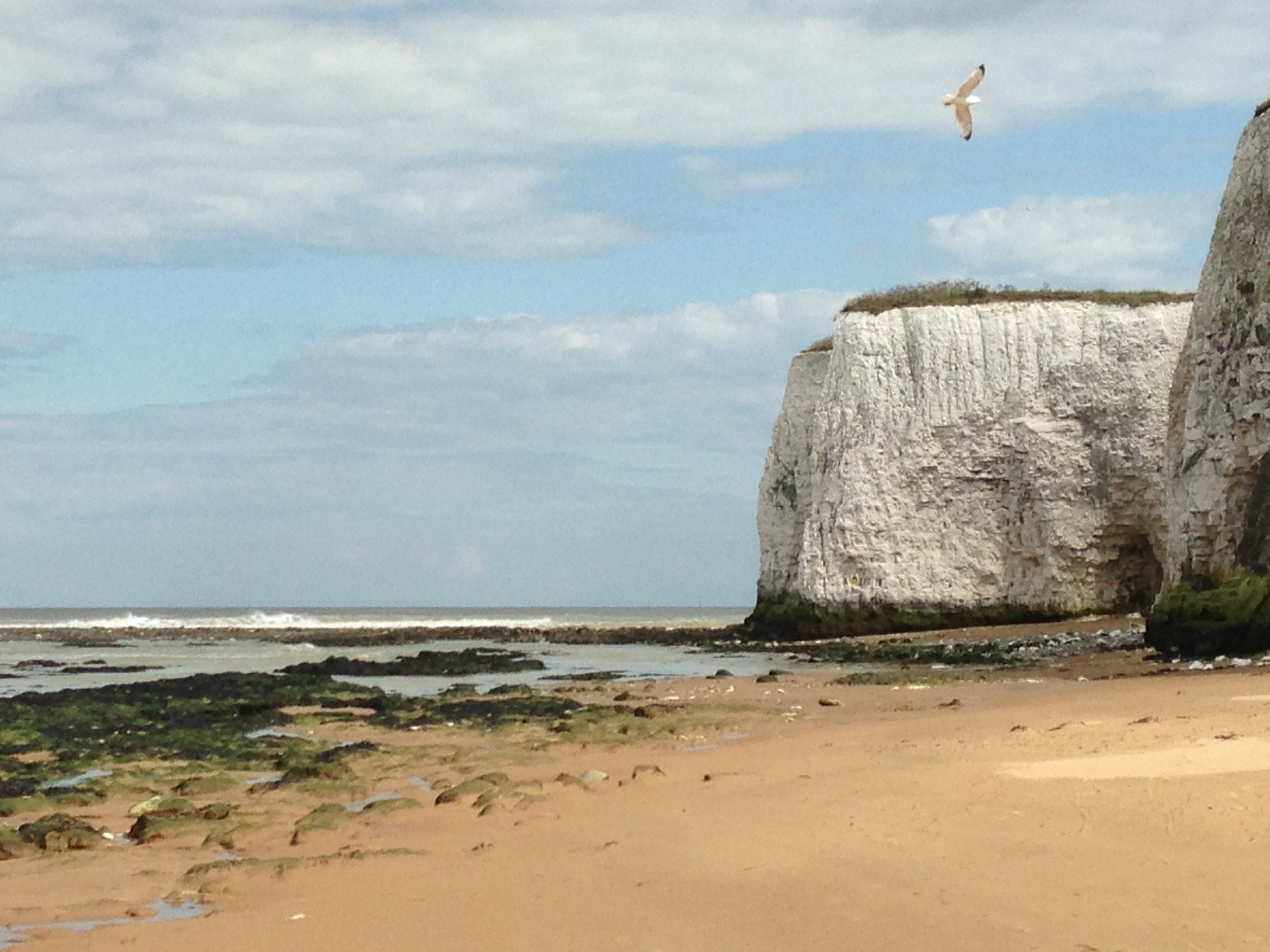botany bay, UK 2015