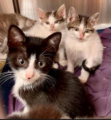 cats with Outta shelter - JF 4-2019.jpg