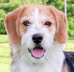 Rescue One dog  JF 5-2019.jpg