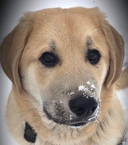 SLV dog JF 2-2019.jpg