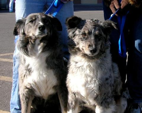 Rez dogs_10.jpg