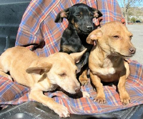 Rez dogs_07.jpg