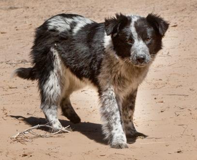Rez dogs_09.jpg