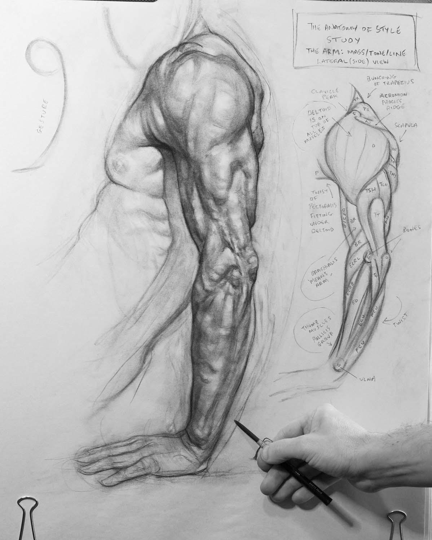 Arm Study1 copy.jpg