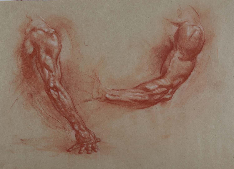 Arms Study.jpg