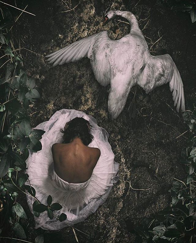 Do you still believe your excuses are admirable? #fineartphotography #conceptualphotography #negligence #swan #dead #regret #art #photography #human #woman #dress #canon #netherlands