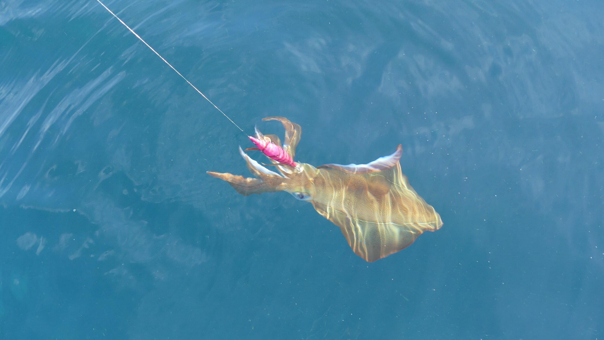 Calamari closures in place now …..