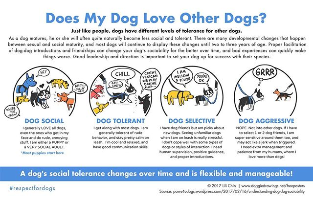 If your pup is a dog park regular, they're likely quite dog social. Scuffles still happen, though! This infographic from Lili Chin of @doggiedrawings illustrates how a dog's tolerance for other dogs can change! #knowyourdog #caninebodylanguage #dogsocialization #clarendondogpark #jameshunterdogpark #clarendonva #dogsofclarendon