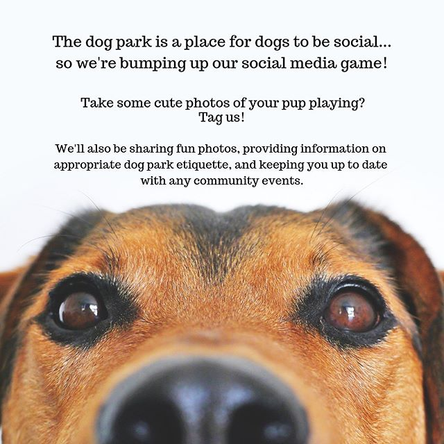 First Instagram post! ☝️ Tag us in your dog park photos, and follow us to keep up with dog park related information, doggie behavior and etiquette, and info about dog park and community events! #jameshunterdogpark #dogpark #clarendondogpark #playnice #clarendonva #arlingtonva #dogsofinstagram #dogsofclarendon