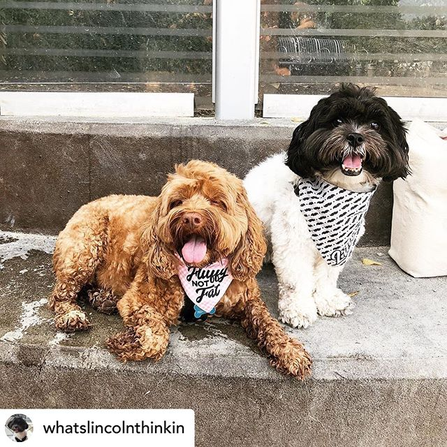Posted @withrepost • @whatslincolnthinkin I'm thinkin'... a little #SundayFunday with my bestie at the @jameshunterdogpark dog park this morning! 🎾 It counts as playing if you sit (hide) on the ledge the whole time right? Asking for a friend 🤣🤣 • • • • • #dogpark #dogparklife #bff #besties #bestfuriendsfurever #twinning #sun #funinthesun #jameshunterdogpark #adventuresofcocoandlincoln #letspawty #dogsofinstagram #shichon #shichonsofinstagram #shichonlovers #dcdogmoms #dogsofdc #capitalpup #dogsofbark  #weeklyfluff #dailybarker #tinydogsofdc #wethedogsdc #dmvdogs #bestwoof #buzzfeedanimals #theellenshow #dogswothstuffedanimals