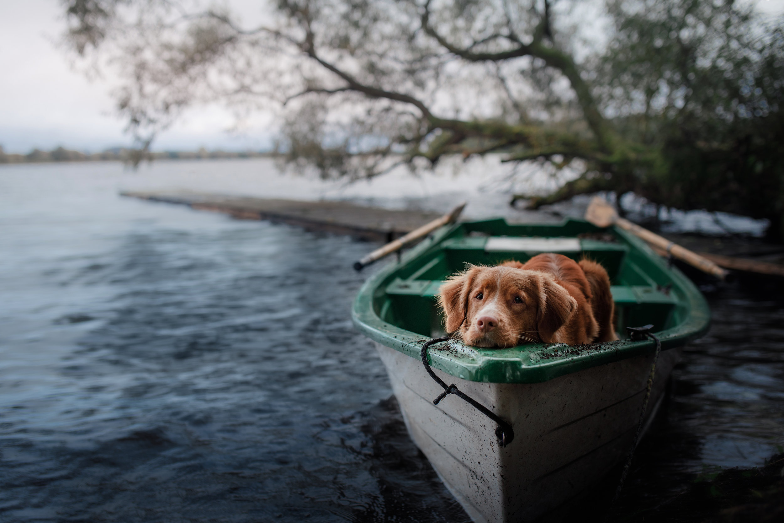 dog on lake.jpg