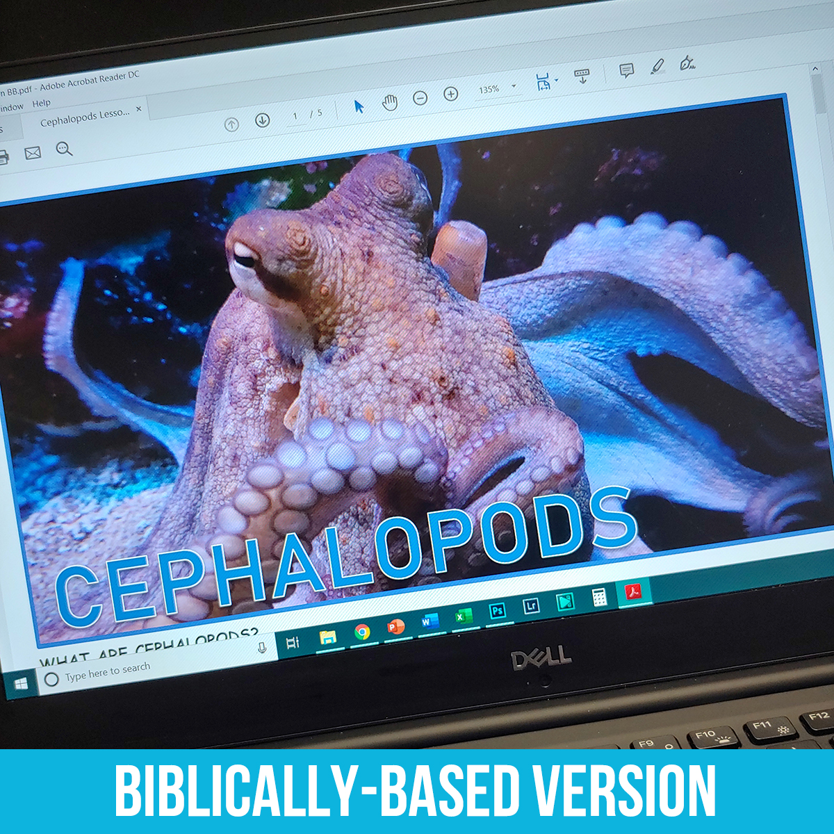Cephalopods PDF BB.jpg