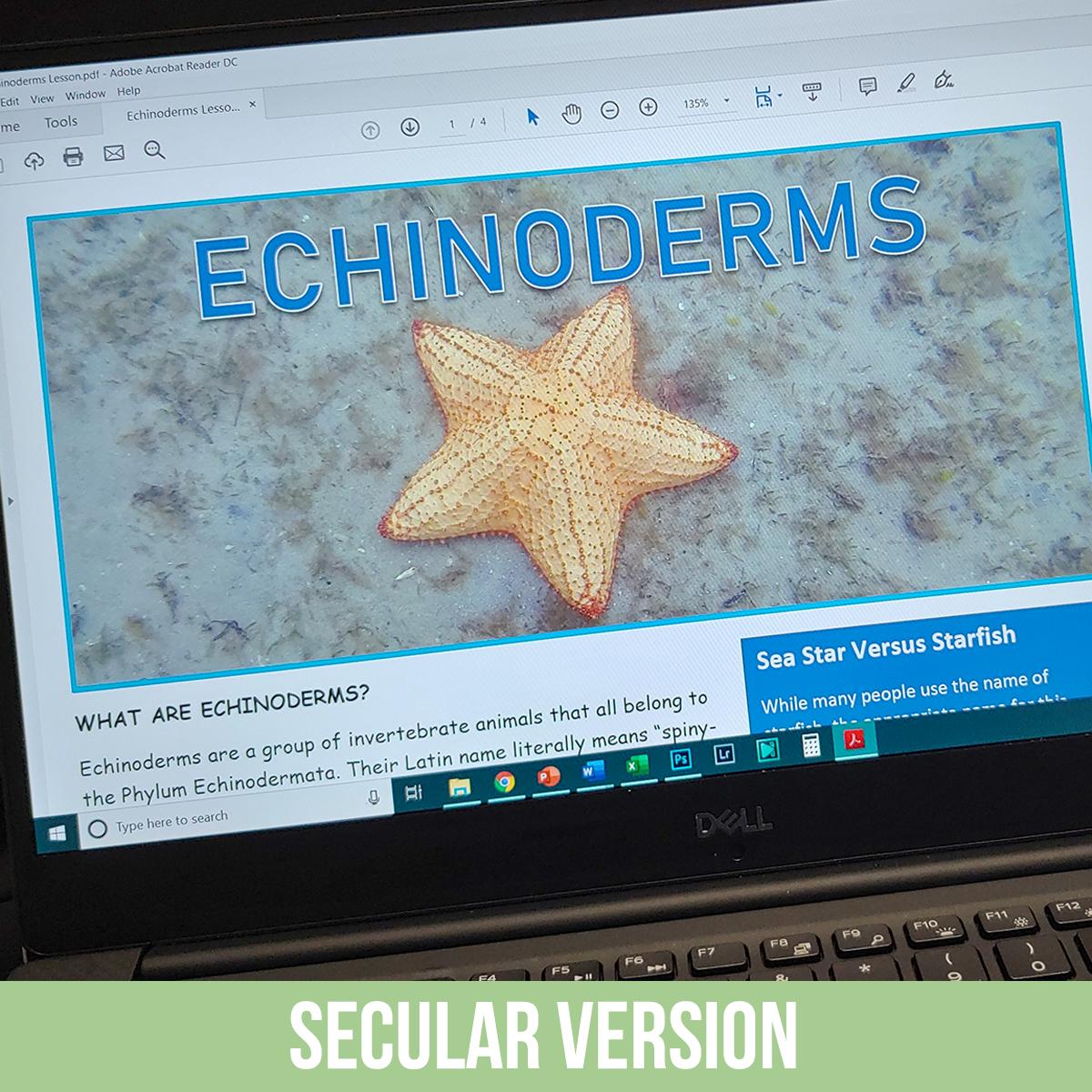 Echinoderm PDF.jpg