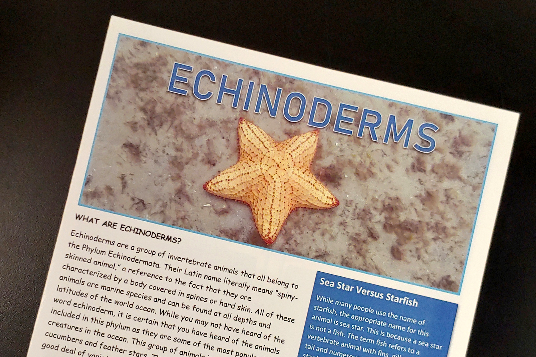 Echinoderms.jpg