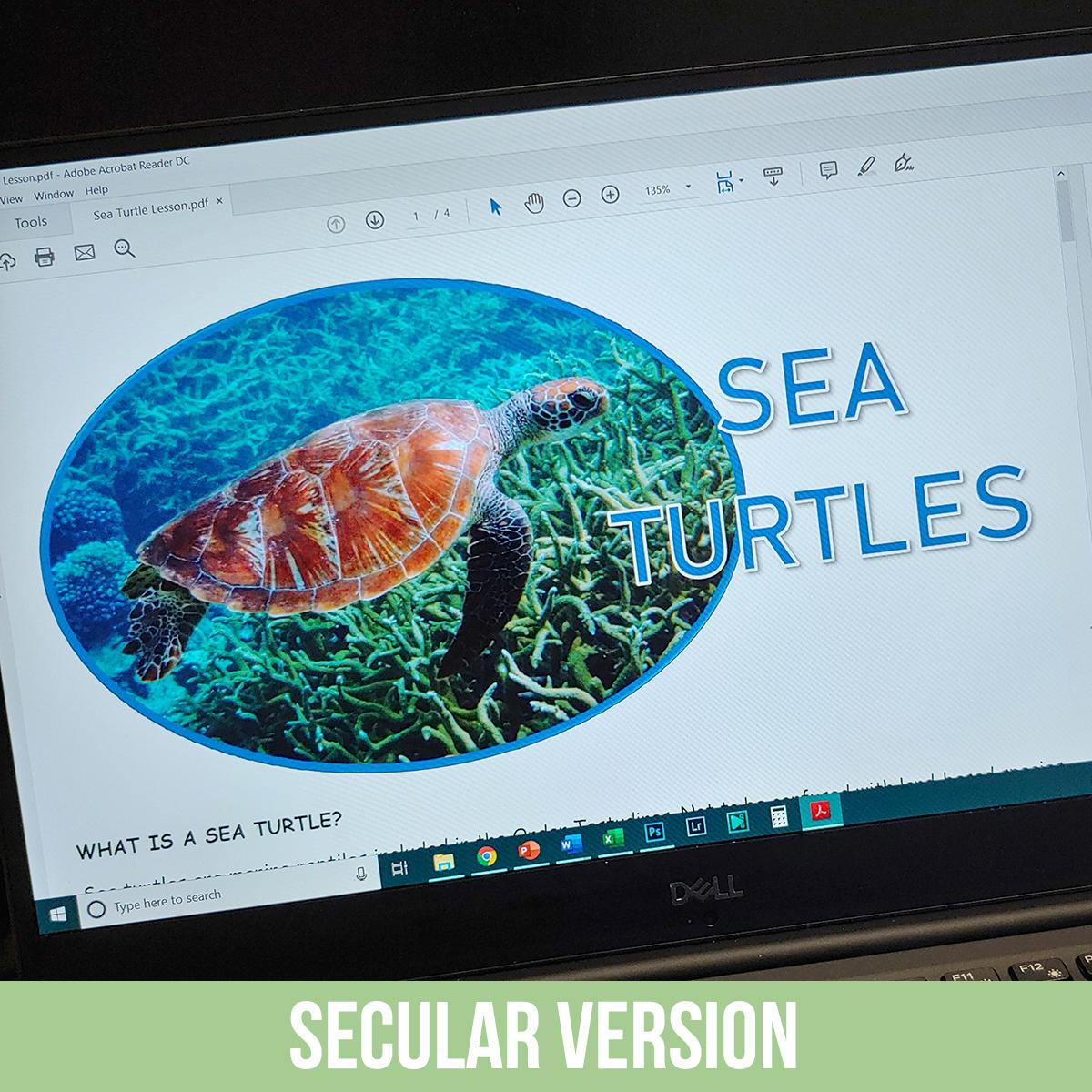 Sea Turtles PDF.jpg