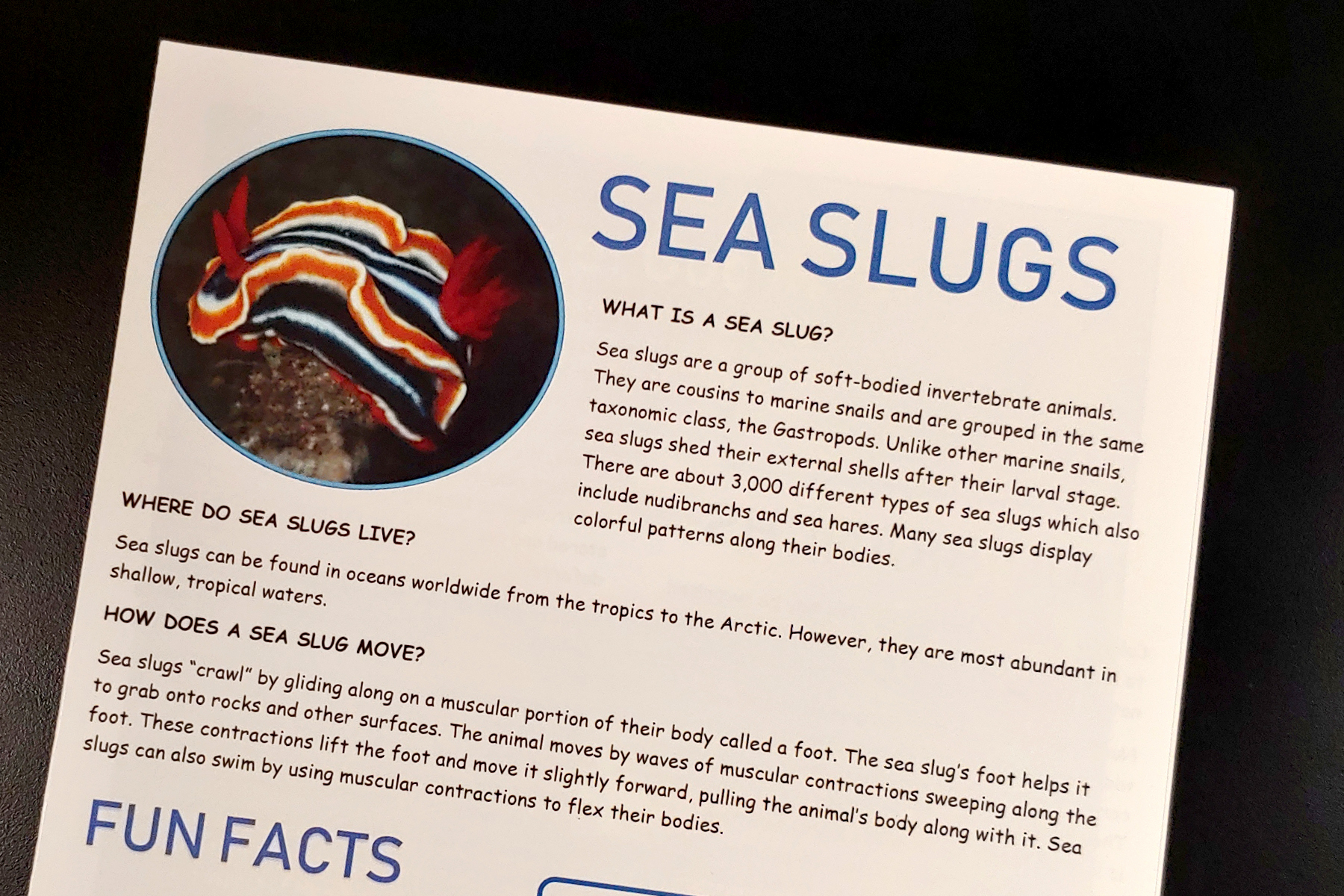 Sea Slugs.jpg