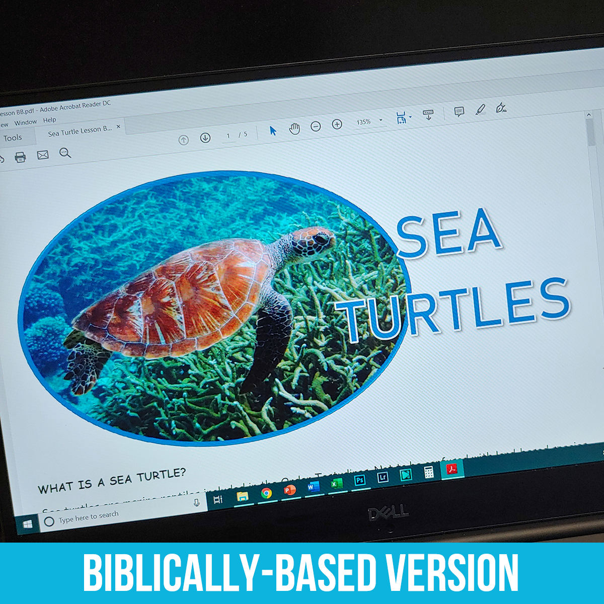 Sea Turtles PDF BB.jpg