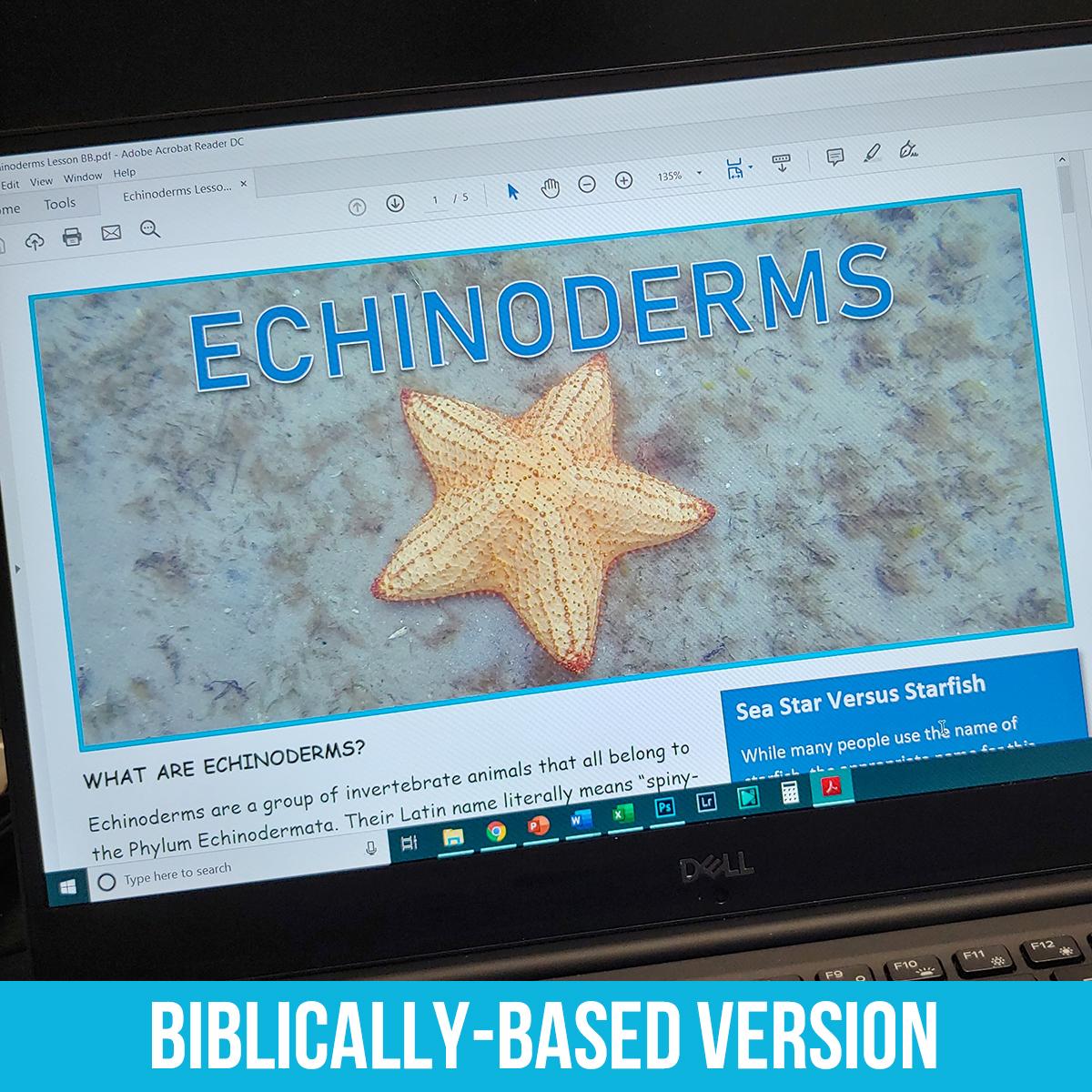 Echinoderm PDF BB.jpg