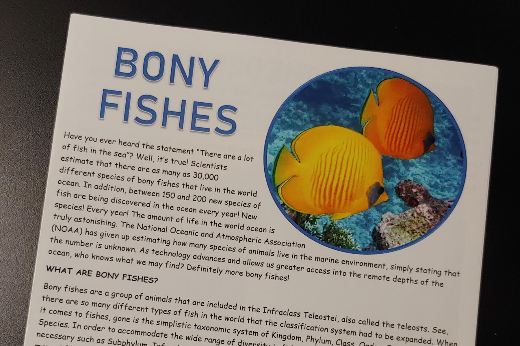 Bony Fish.jpg