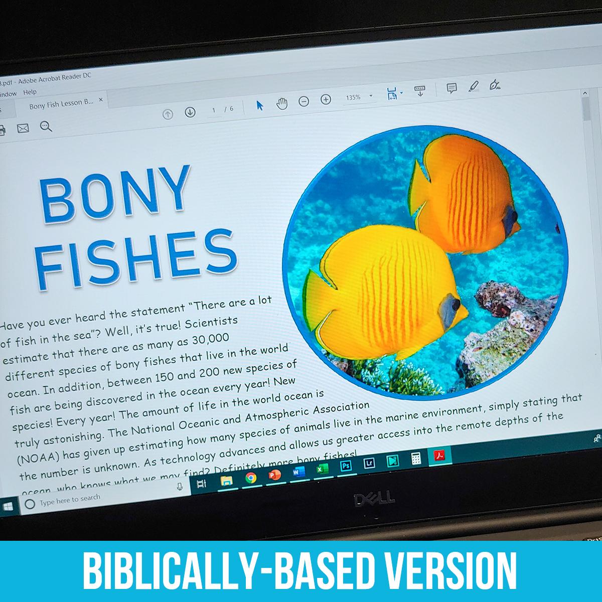 Bony Fish PDF BB.jpg