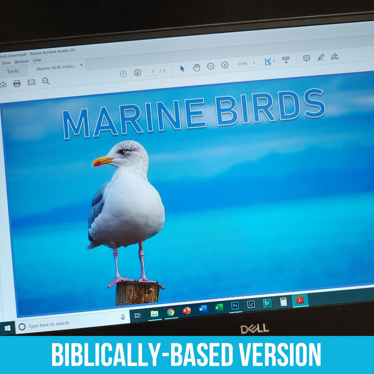 Marine Birds PDF BB.jpg