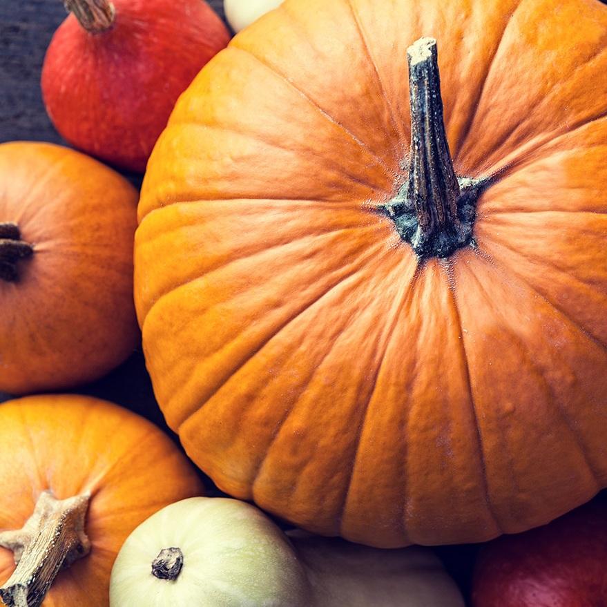 pumpkins_1500.jpg