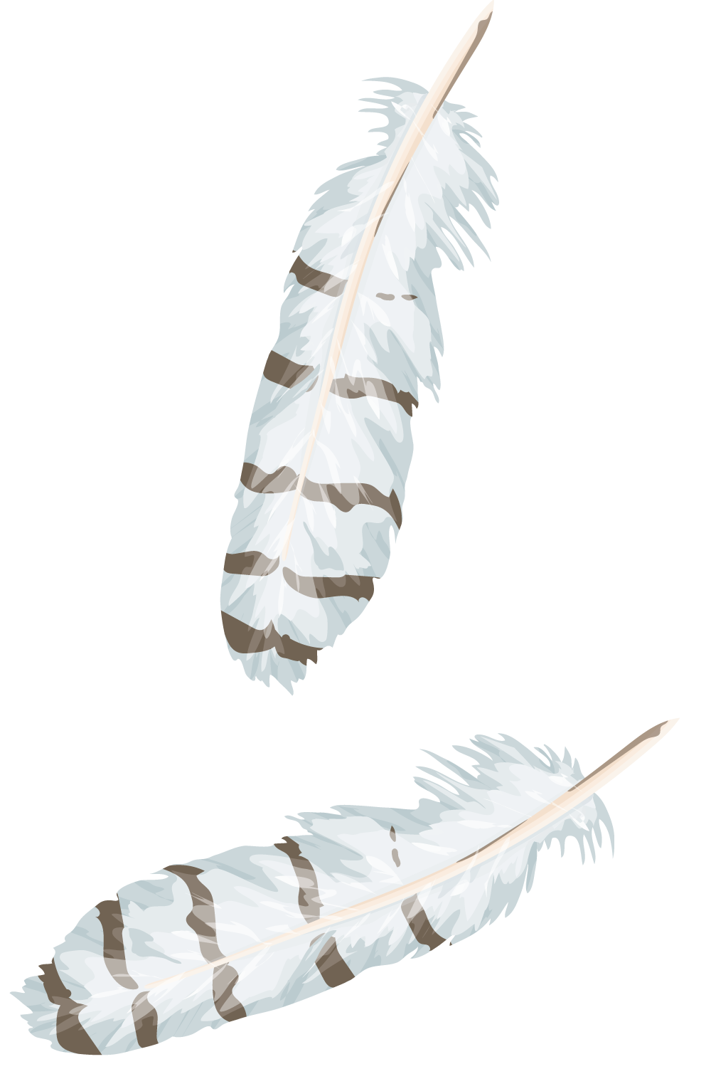 feathers-b.png