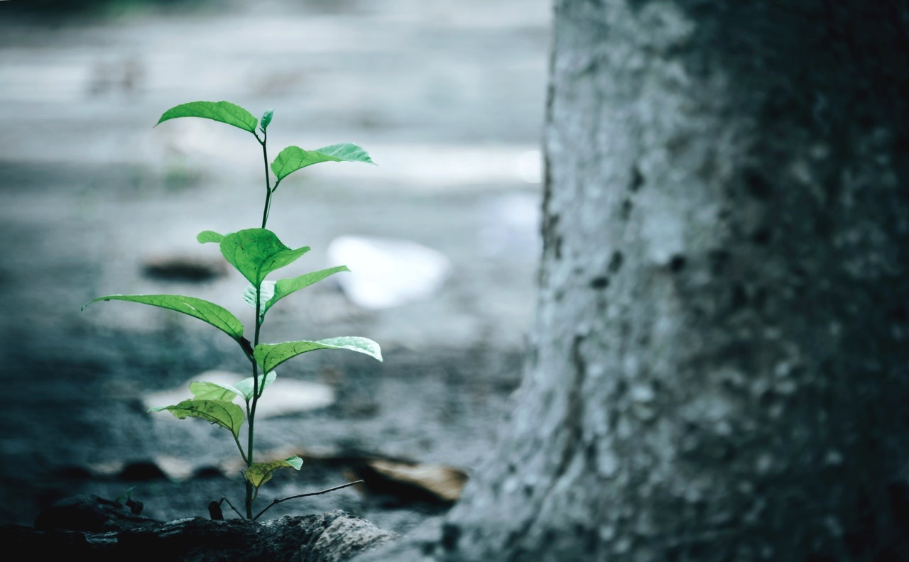 The Best Time To Plant A Tree, a blog post by Beth Power of The Customer Initiative, about customer success strategies.
