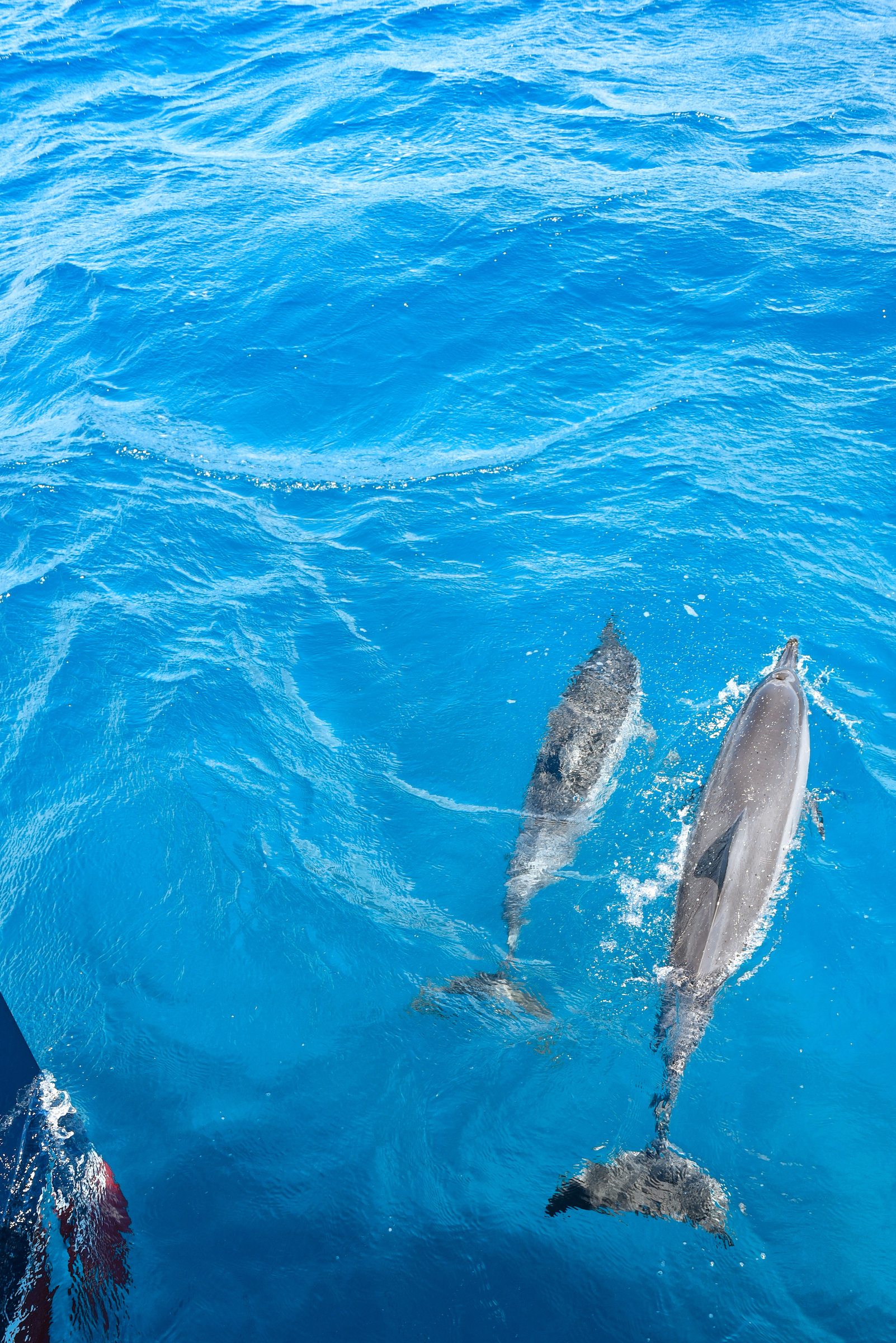 dolphins Orchard 0216.jpg