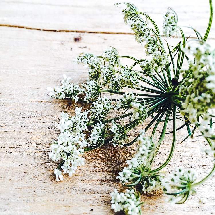 What's an umbel? - An umbel is a flower cluster that looks like an inside-out umbrella. Umbels are formed by an incredible range of plants, from vegetables to herbs to flowers. We love them!