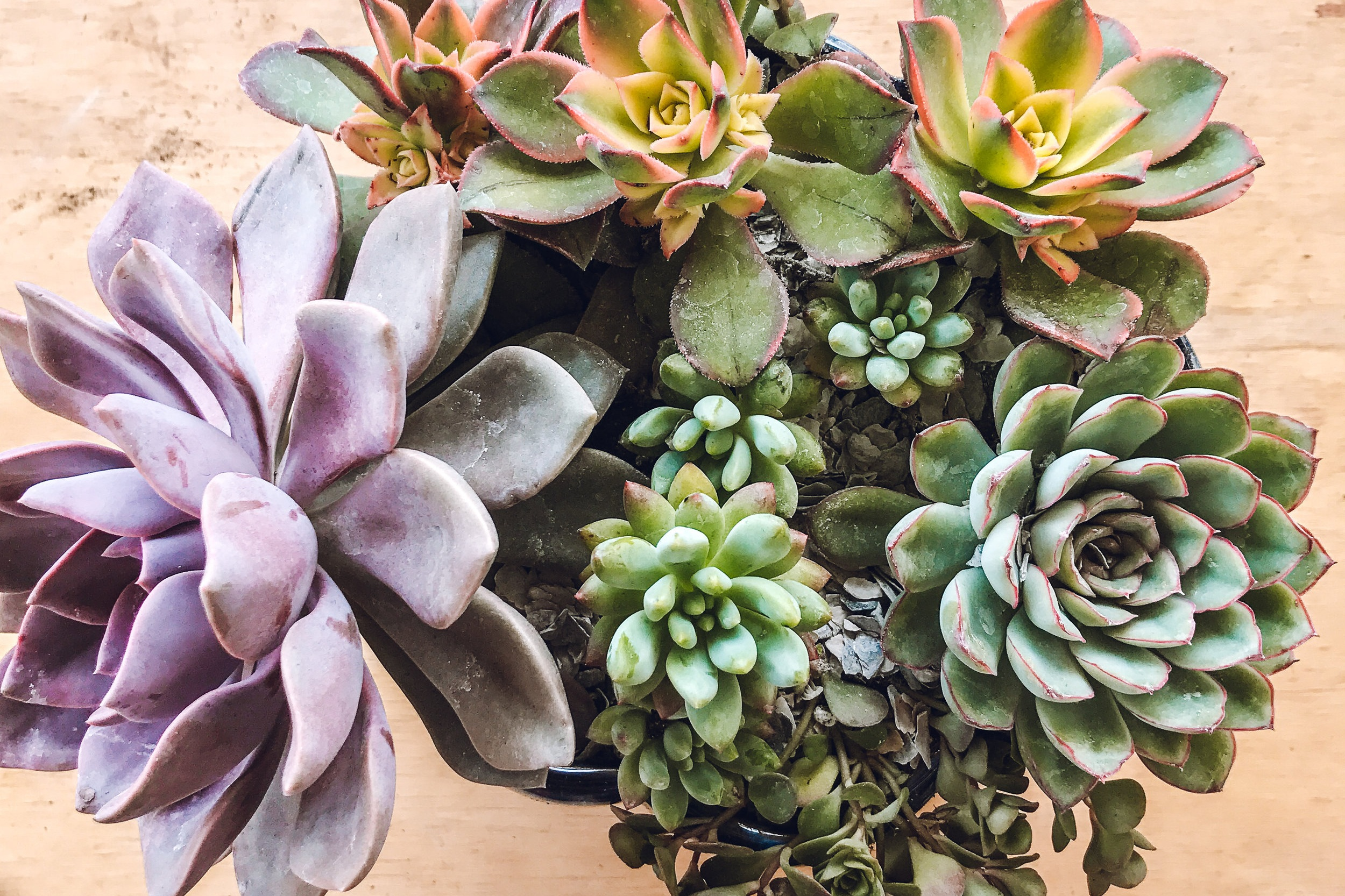container design - We have pre-planted containers available for sale at the nursery, or we can work with you to build a custom creation based on your favorite colors, growing conditions, and preferences.