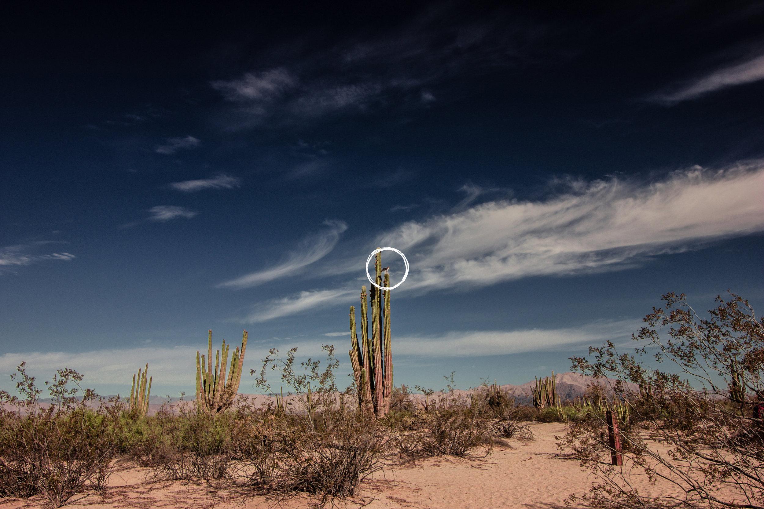 20180611-Baja_Valley_of_Giants_05B.jpg