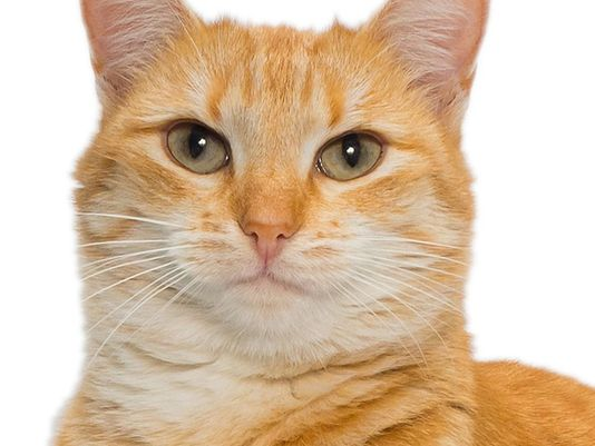 636124053572235005-101816orange-cat-thinkstock.jpg