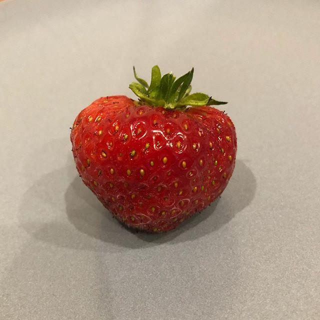 The first strawberry picked from our garden!  #plasticfreefood #plasticfreefruit #growyourownfruit #ourgarden #ecofriendlyliving #waronplastic #journeytozerowaste #plasticfreejuly #strawberry🍓