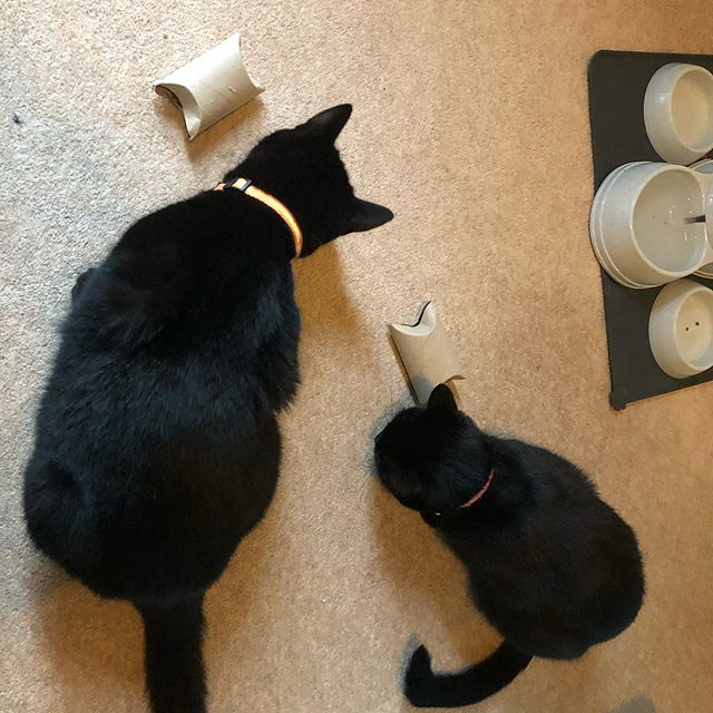 👋 Hello again! So it's been a hectic few months in our house. Jo has finished her masters, we had a busy end of August and September going on holiday and attending multiple cycling events in the UK. The biggest bit of news is that we have adopted these two beautiful kitty cats. Introducing Chip and Belle 😻😻(notice their toilet roll treat dispensers!) #catsofinstagram #ecofriendlyliving #welcomeback #ecofriendlypets #blackcatsrock #ecoexcitingbox #plasticfree #plasticfreeliving #ecofriendlyliving #sustainableliving #zerowaste #zerowasteuk #reduceplastic #reducewaste #salutethereuser #ditchthedisposables #savetheplanet #reduceplasticwaste #plasticfreeswaps #zerowastetips #plasticfreelife #zerowastecommunity #thereisnoplanetb #lowimpact #saynotosingleuseplastics