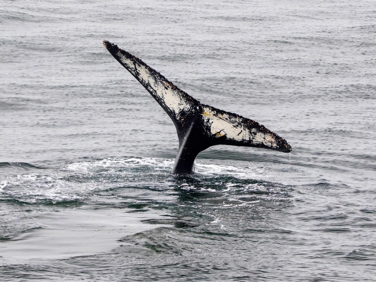 whales-antarctica