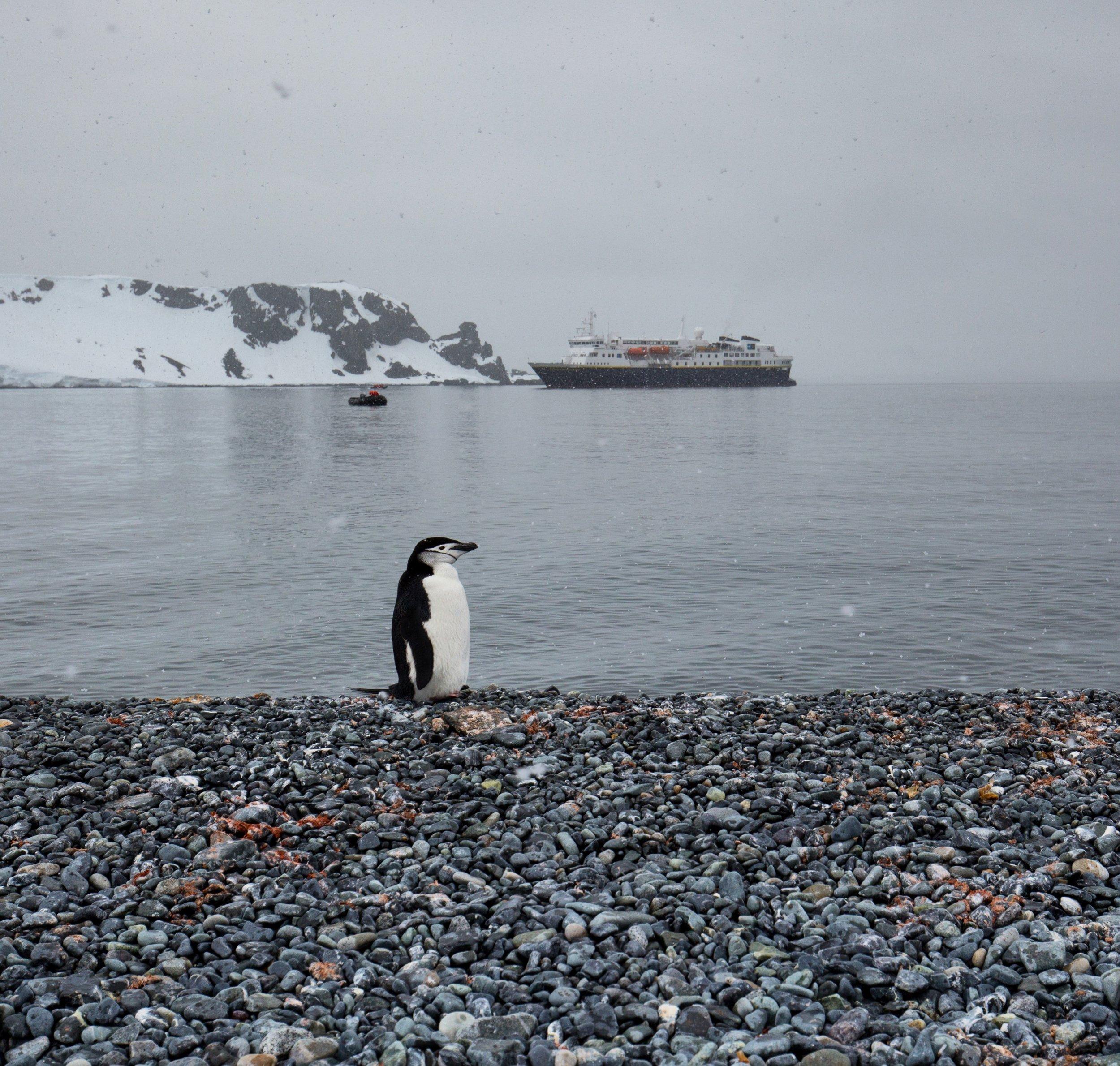 lone-penguin