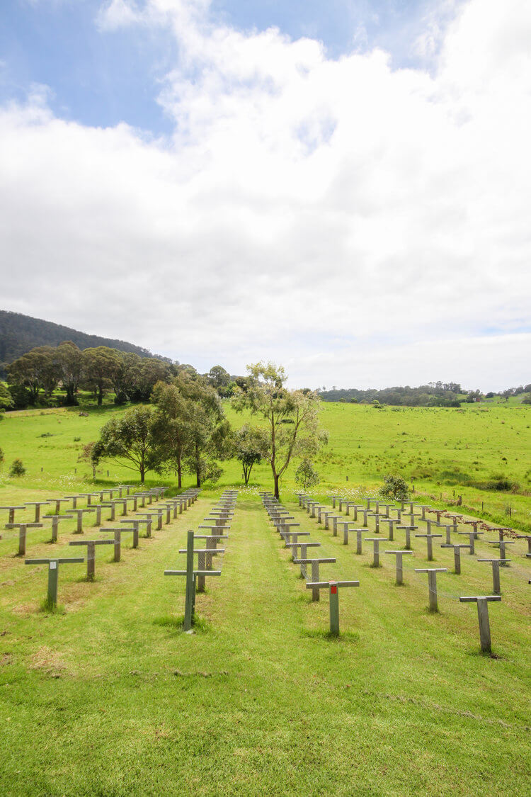 Our drying racks in the valley below Mount Gulaga
