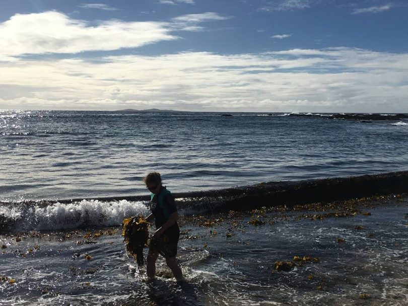 Jo Lane out collecting seaweed. Photo: Sea Health Products Facebook.