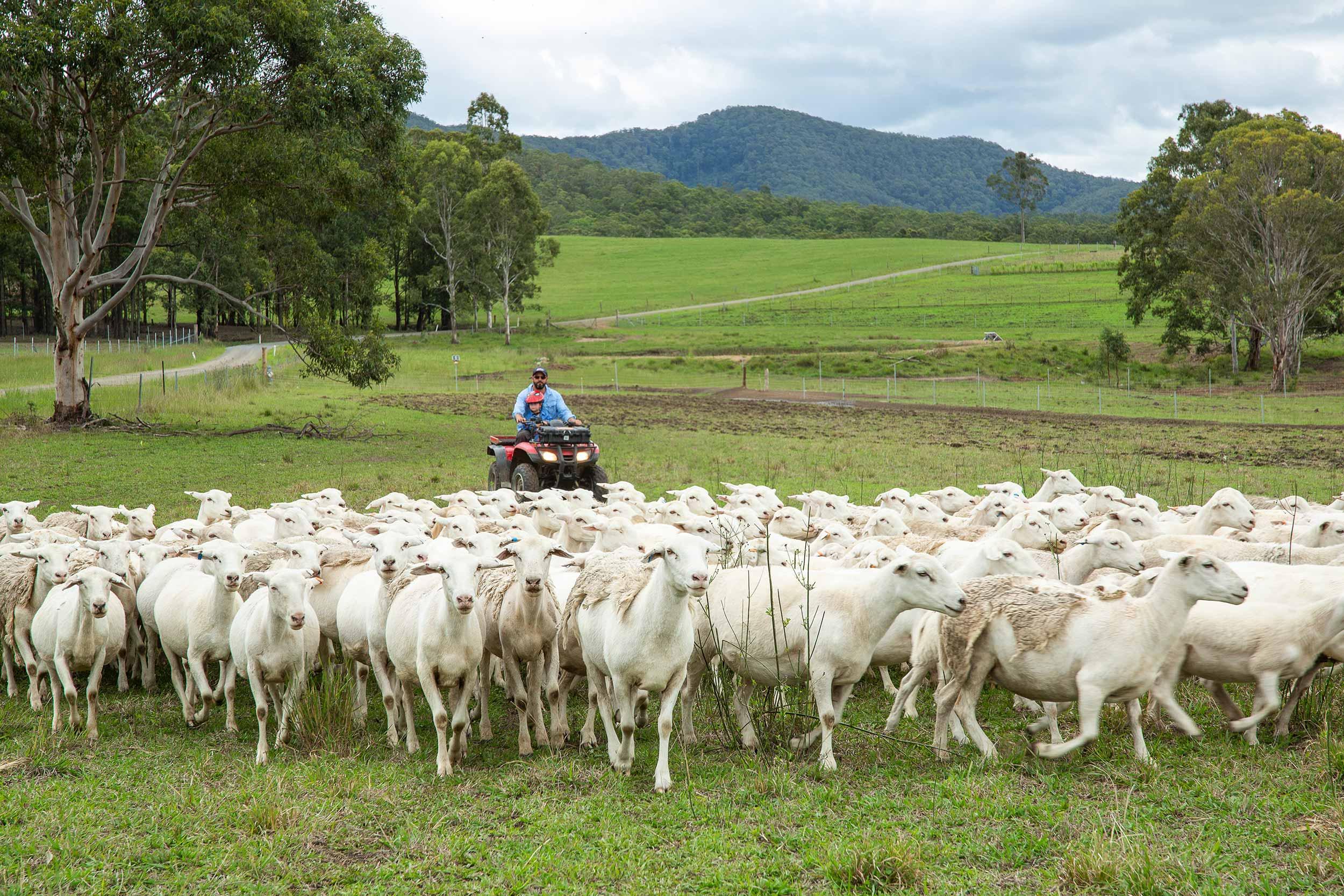 glft-yeo-farm-organic-pasture-raised-lamb (1).jpg