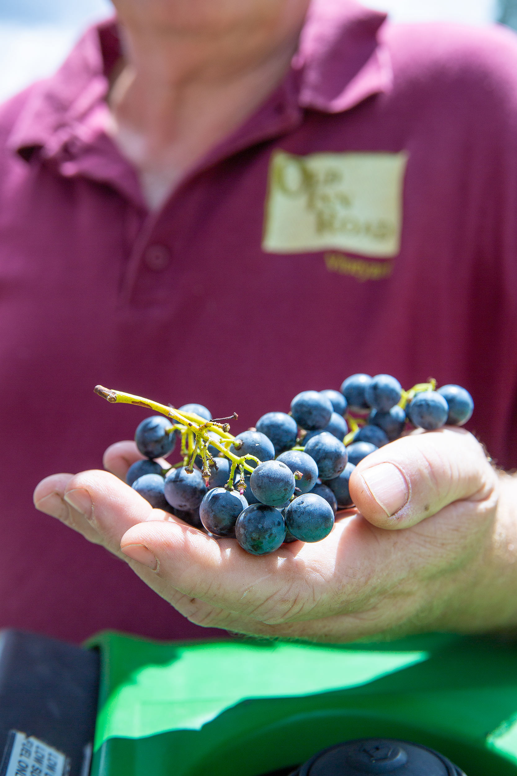 glft-old-inn-road-local-hand-picked-grapes-wine(1).jpg