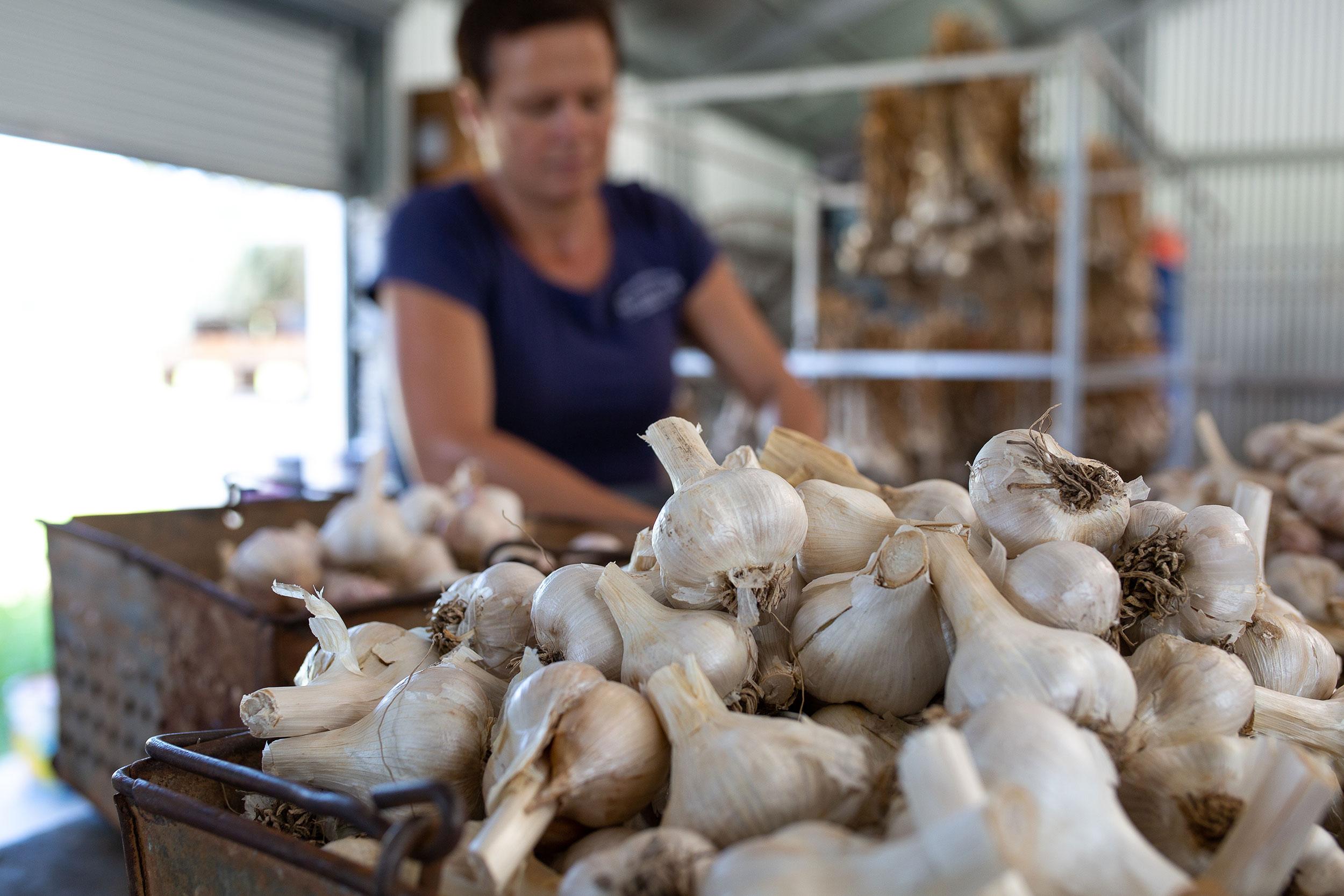 glft-valley-view-farm-co-garlic.jpg