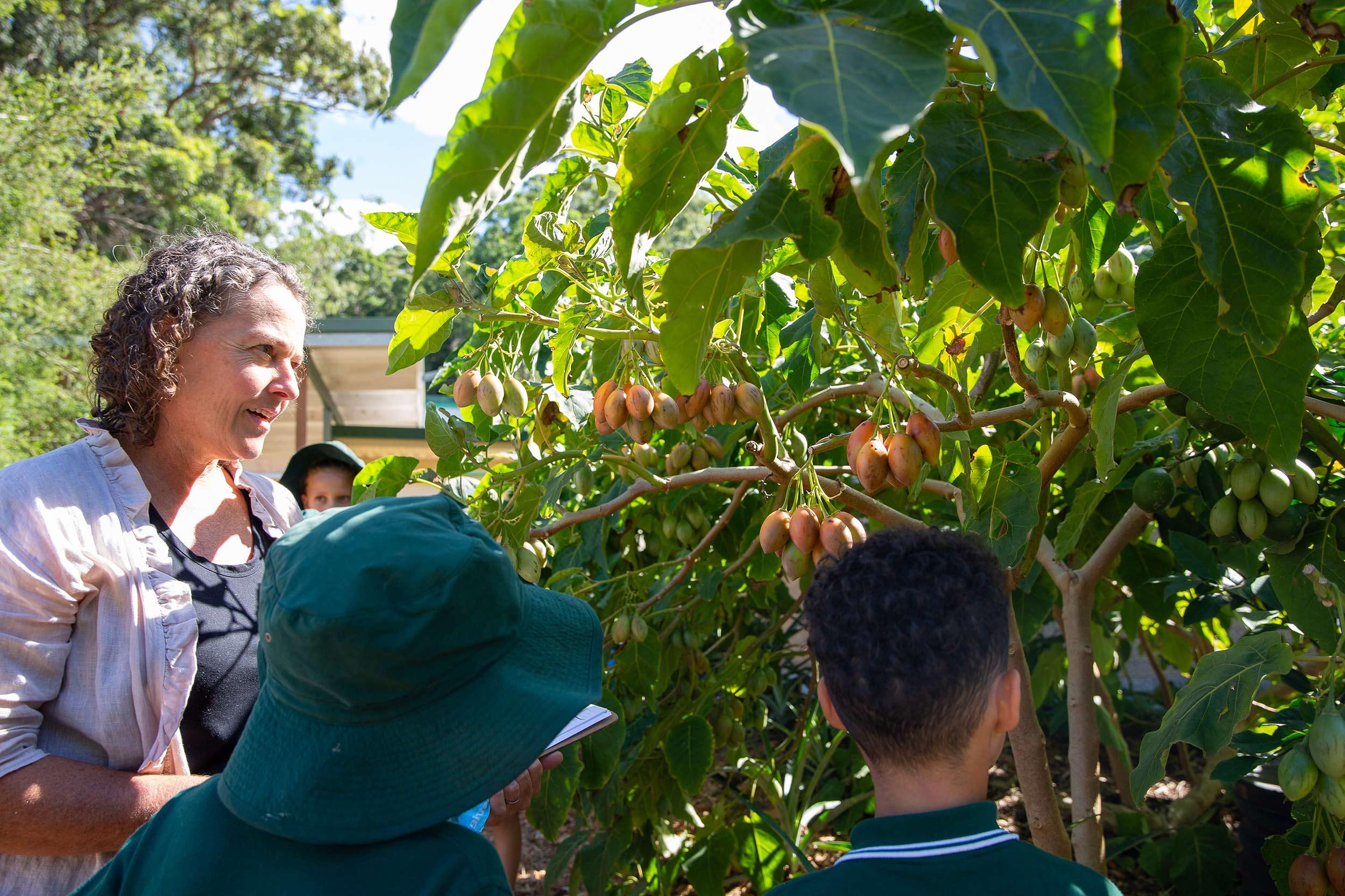 glft-bungwahl-school-kitchen-garden-harvest.jpg
