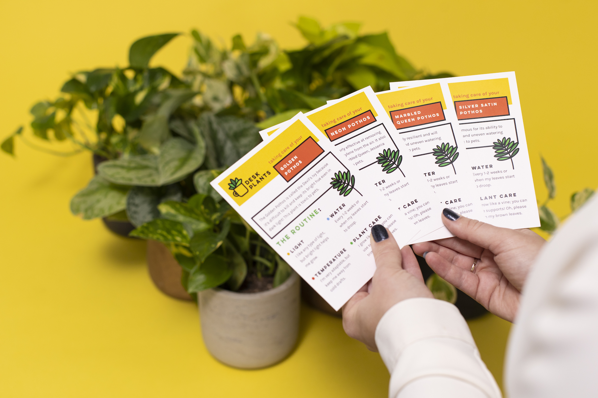 Simple care cards are given with each plant. The card reviews the plant's needs for water, light, temperature, and has Desk Plants' contact information.