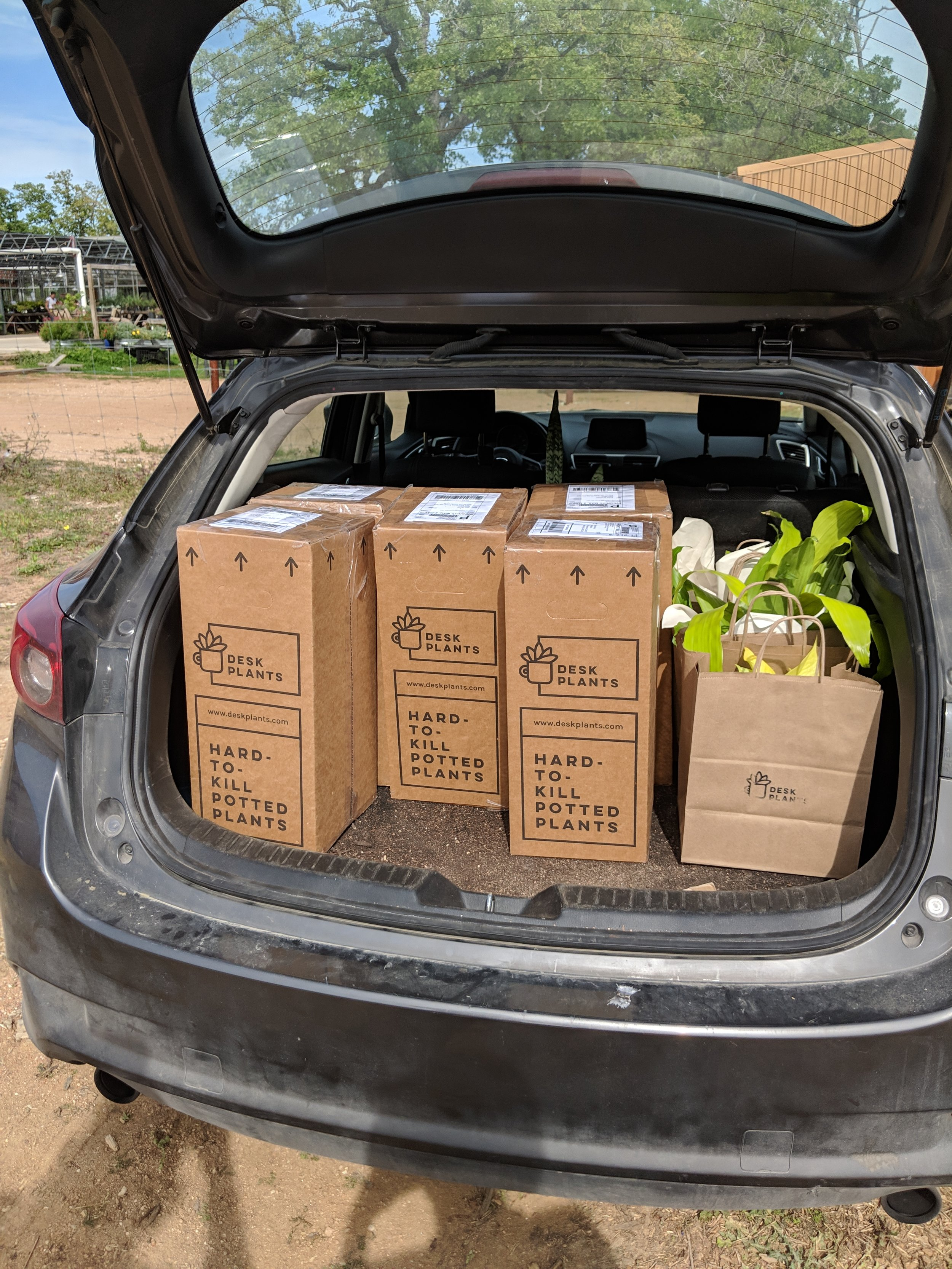Plants on their way to the Post Office! Check out that packaging!